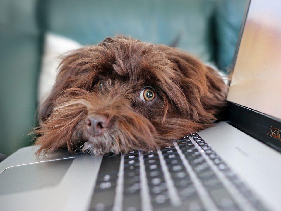 Hond online meeting